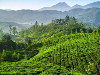 Students Munnar / Athirampalli Tour