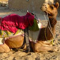 Jaisalmer and Desert Camp Package