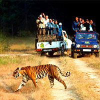 Delhi - Corbett - Causeni - Nainital Tour - 6 Night And 7 Days