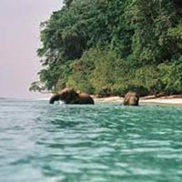 Amazing Andaman Package