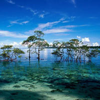 Andaman Tour - 9 Night 10 Days Package