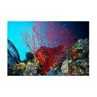 Coral Island Tour