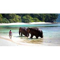 Andaman Beach Tours