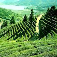 Assam Valley Tour