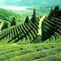 Assam Valley Tour