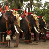 Kerala Wild Life With Beach Tour