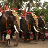Kerala Wild Life With Beach Tour